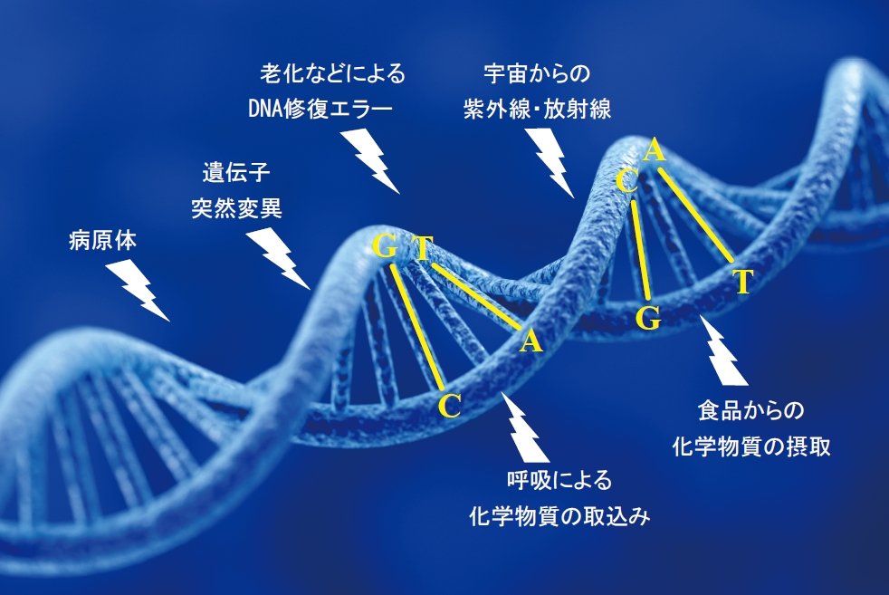 がん遺伝子治療とは | がん遺伝...